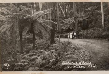 Historical Postcards of Mt Wilson