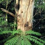 gum and tree fern