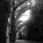 the avenue bw
