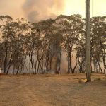 back burning below the mt wilson fire station fri 18 oct